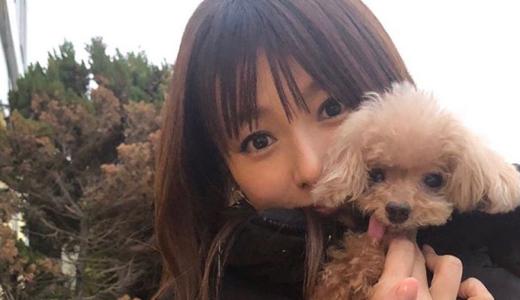 深田恭子の愛犬はメロンパンナとぽっけ!名前由来や舌出し画像が可愛すぎる!